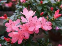 Ботанический сад поделился с новгородцами фотографиями своих цветущих питомцев
