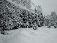 Как Новгородскую область снегом замело: репортаж из соцсетей