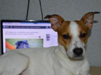 Определены победители фотоконкурса собак