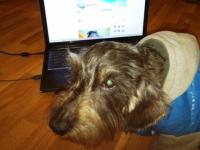 В нашем фотоконкурсе собак принимает участие Йети