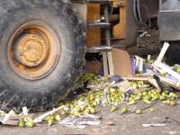 В Новгородской области уничтожили около 300 кг санкционных груш