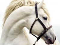 На празднике в новгородском детском саду девочку укусила лошадь