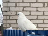 В Пестове жителей продолжает волновать голубиная судьба