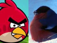 В Поддорском районе замечены Angry Birds