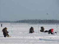 На соревнованиях по подледному лову в Валдае рыбаков встретил «орнитологический сюрприз»