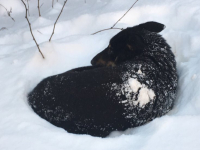 Волонтеры спасли собаку, сбитую фурой в Парфинском районе