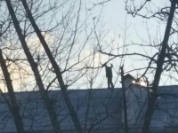 Новгородец устроил экстремальную прогулку по крыше многоквартирного дома
