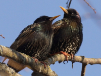«Похоже на души грешников»: как орнитолог Рдейского заповедника и ее коллега определяли птиц по записи