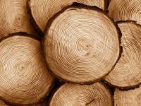 Прокуратура помогает жителю Демянского района получить свою древесину