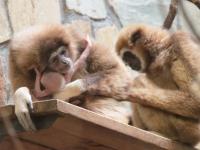 В Ленинградском зоопарке - новорожденный