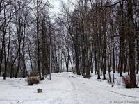 В Новгородскую область прилетели грачи