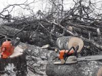 Вальщик дерева, убившего девочку в боровичской деревне, ответит по УК