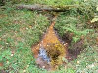 Администратор группы «Валдайский лес» предложил квест: найти место, которое «исчезло»