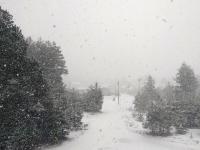 Хвойную заметает снегом после +20 градусов