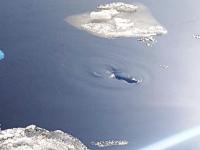 Маленькая нерпа приплыла к петербургскому театру вместе с ладожским льдом