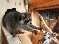 После «Зимней вишни» множество людей подписывает петицию против контактных зоопарков в ТРЦ