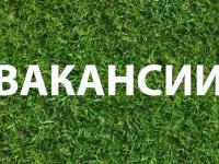 Пятерка актуальных новгородских вакансий. 26 апреля