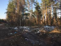 По прогнозу погоды в Боровичах сегодня... мусорно