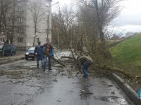 В Великом Новгороде ветер валит деревья