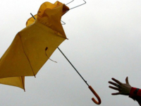 Жителей Новгородской области весь день будет сопровождать сильный ветер