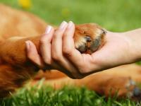 Зоозащитники завтра выйдут к «Руси» требовать справедливости для животных