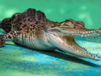 Может ли крокодил привести к Богу? Священник из Ленобласти в этом уверен, поэтому открыл при храме зоопарк