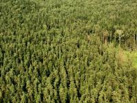 Началось авиапатрулирование новгородских лесов