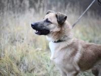Новгородский пёс повторил судьбу известного футболиста и получил в честь него кличку