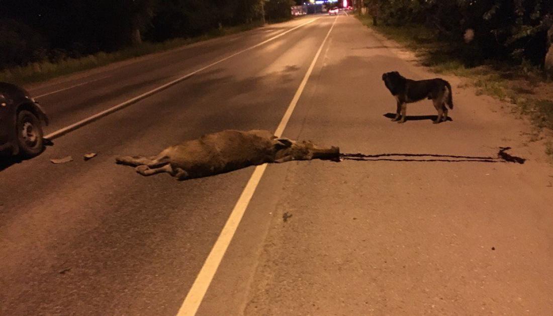В Новгородской области погибли еще два лосёнка