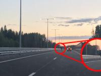 Фото: в Новгородской области ограждение на М-11 не стало препятствием для лося