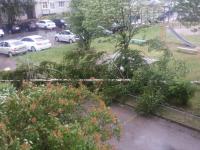 В Новгородской области может повториться ураган