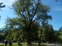 В Новгородской области растут четыре дерева, за фото которых можно получить 100 000 рублей