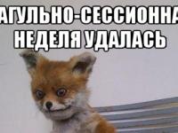 В Новгородской области разыскивают не хитрых лисиц