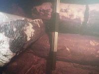 Подводные археологи сделали сенсационную находку на дне Волхова