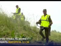 В Великом Новгороде показали, какой высоты должна быть трава