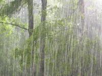 Новгородскую область штормит. Жителям вновь прислали предупреждение