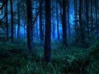 Из батецкого леса сегодня ночью вывели 68-летнего грибника