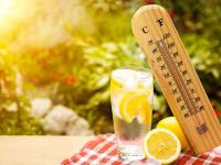 Погода обещает еще неделю радовать новгородцев невиданной жарой