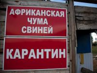 В четырех районах Новгородской области ввели карантин по АЧС
