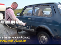 Видео: в Волотовском районе введен карантин по АЧС