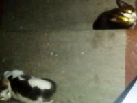 Новгородская зоозащитница прокомментировала новость о «кошкоеде» из Молочного