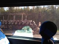 На М10 в Новгородской области загорелась фура с кошачьими кормами