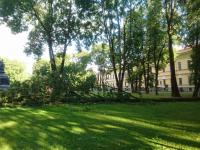 Фотофакт: шторм свалил дерево рядом с памятником «Тысячелетие России»