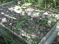 Новгородцы опасаются эпидемии из-за стихийного кладбища домашних животных на Псковской