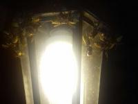 Почем обработка дома от насекомых и что советуют новгородцы в борьбе с шершнями?