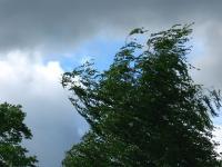 В Новгородскую область пришел циклон с порывистым ветром