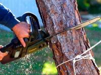 В Великом Новгороде на машину упало дерево — ребенок в больнице