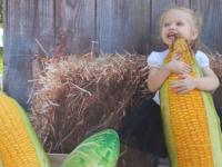 Фестиваль «Своё» открывает новые имена фермерских хозяйств
