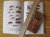 Из-за сухого лета в Рдейском заповеднике сократилась численность одного вида грызунов