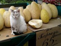Кошка Дуся помогает продавцам «Гагаринского рынка» продвигать товар